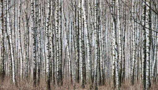 Wo ist der Wald?